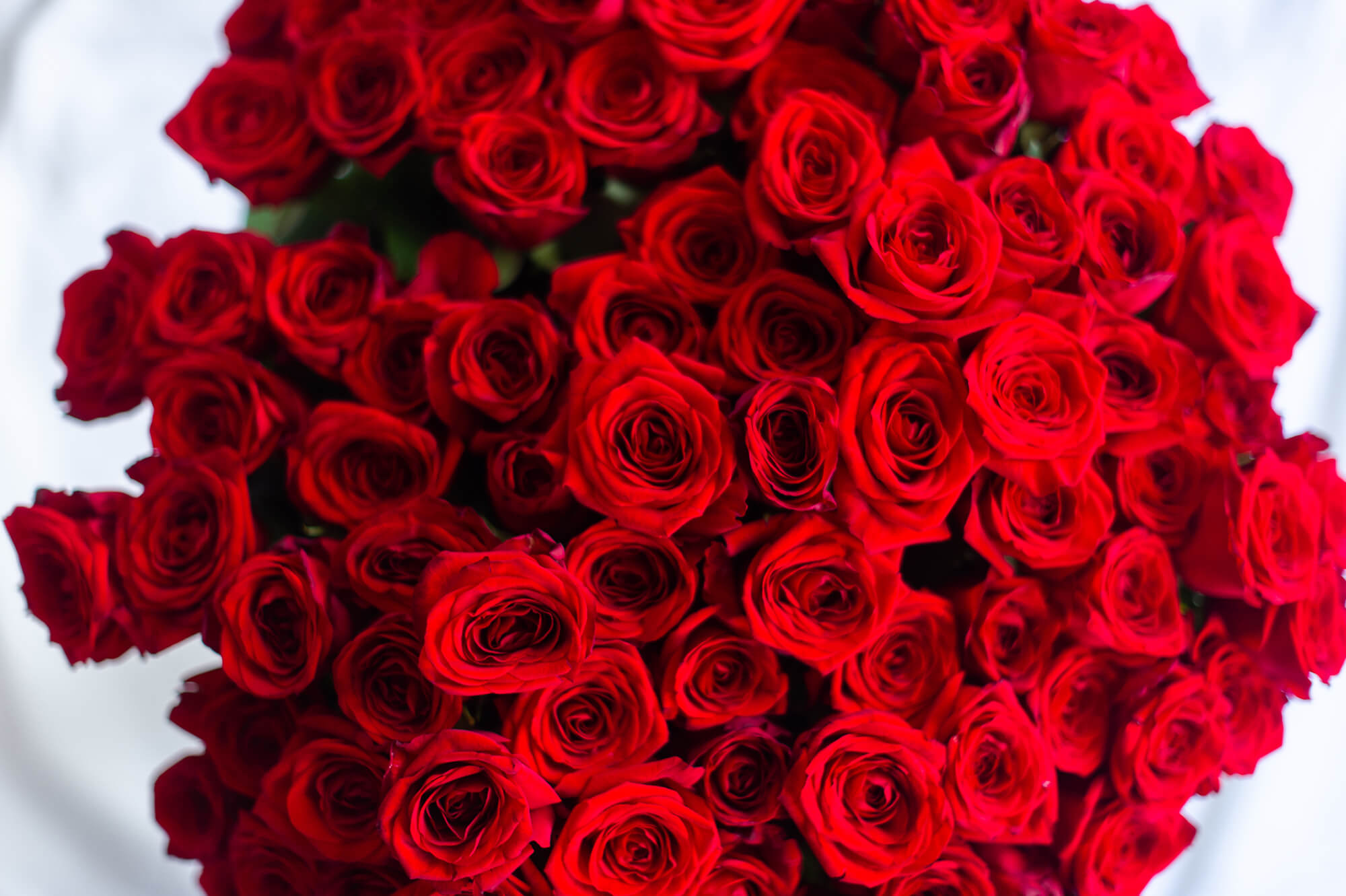 theflowershop-floresadomicilio-floresporsuscripcion-florespormembresia_bouquet_flores_bouquet_rosas_rojas