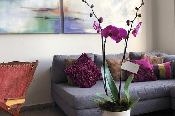 theflowershop-flores_a_domicilio-flores_por_suscripcion-flores_por_membresia_bouquet_flores-bouquet_lilis-orquideas
