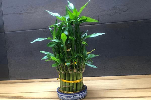 theflowershop-flores_a_domicilio-flores_por_suscripcion-flores_por_membresia_bouquet_flores-pagoda_bambu-pagoda_bamboo_2