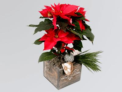 theflowershop-flores_a_domicilio-flores_por_suscripcion-flores_por_membresia_bouquet_flores-nochebuena-3994