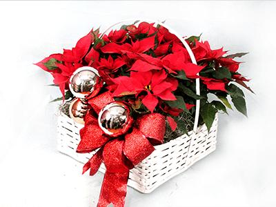 theflowershop-flores_a_domicilio-flores_por_suscripcion-flores_por_membresia_bouquet_flores-nochebuenas-4012