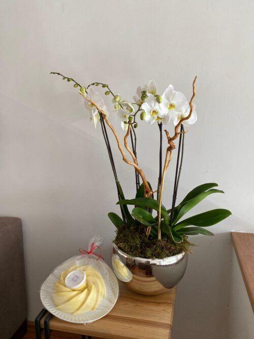 theflowershop-floresadomicilio-floresporsuscripcion-flores_por_membresia_bouquet_flores-2_orquideas_con_gelatina