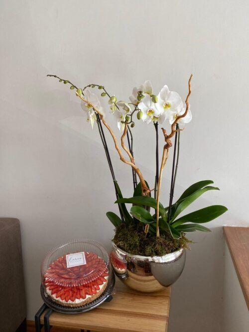theflowershop-floresadomicilio-floresporsuscripcion-flores_por_membresia_bouquet_flores-2_orquideas_con_mostachon