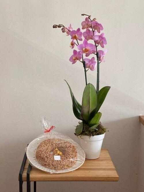 theflowershop-floresadomicilio-floresporsuscripcion-flores_por_membresia_bouquet_flores-orquidea_con_enjambre