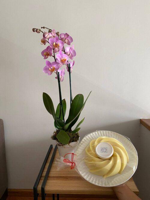 theflowershop-floresadomicilio-floresporsuscripcion-flores_por_membresia_bouquet_flores-orquidea_con_gelatina