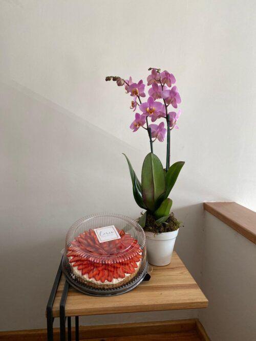 theflowershop-floresadomicilio-floresporsuscripcion-flores_por_membresia_bouquet_flores-orquidea_con_mostachon